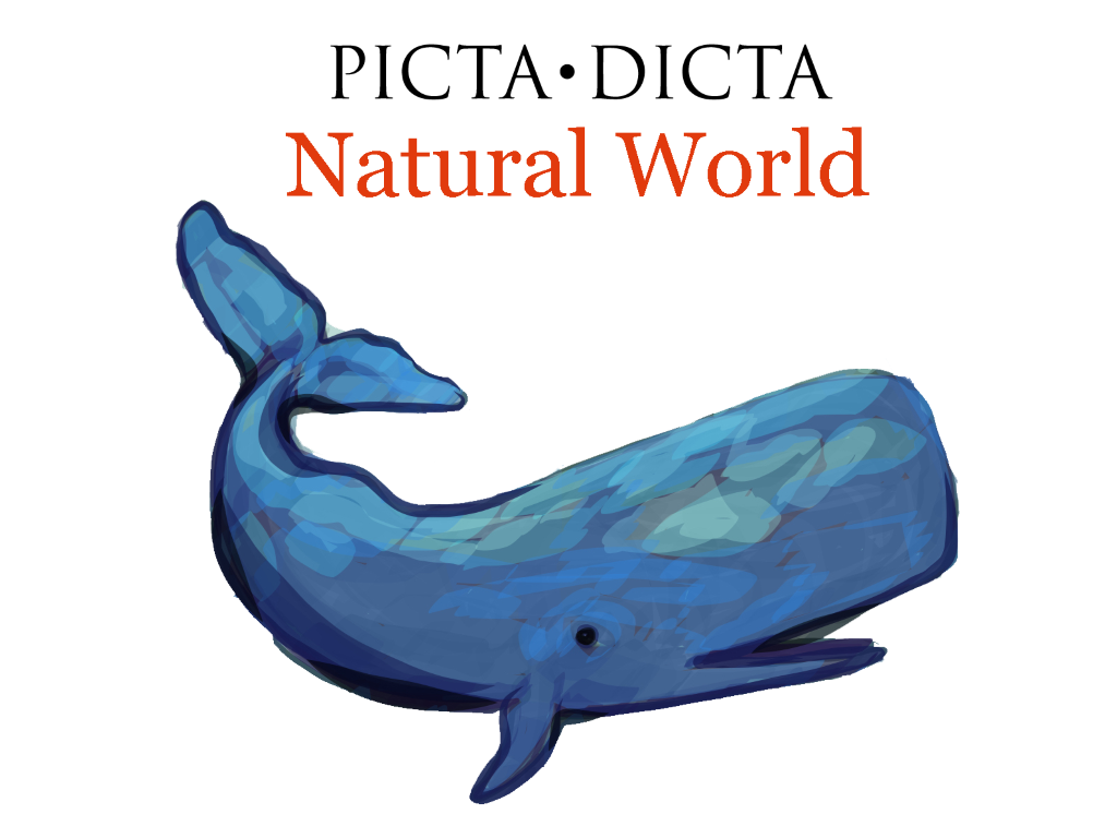 Picta Dicta Natural World Graphic